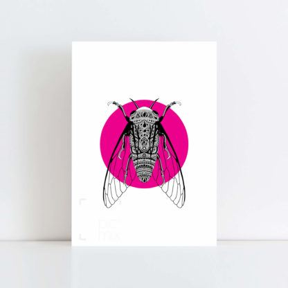Original Illustration of a Cicada with Pink Background No Frame