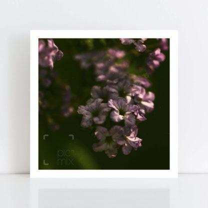 Original Photo Print of 'Flower Grime' No Frame