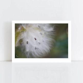 Original Photo Print of 'Furry Swan' No Frame