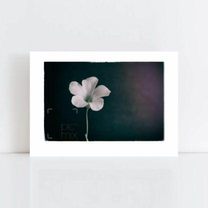 Original Photo Print of 'Lonesome Flower' No Frame
