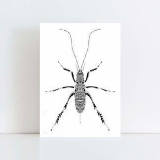 Original Illustration of a Weta with a white background No Frame