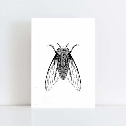 Original Illustration of a Cicada with White Background No Frame
