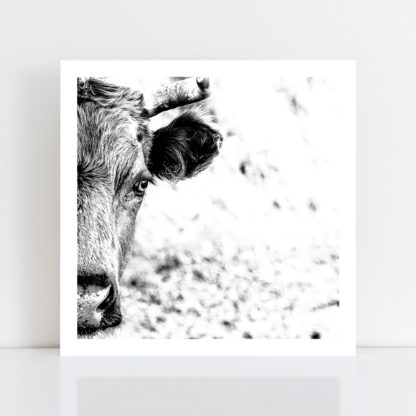An Original Photo Print of a 'Cow' no frame