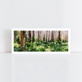 A panorama original photo print of 'Paper Bark Forest' No Frame